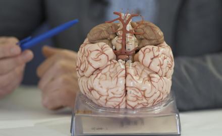 Mozek jako fascinující orgán